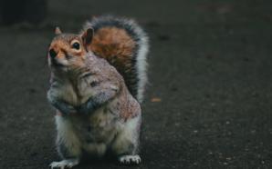 A spasso per Bournemouth: gli scoiattoli, la ruota panoramica e…
